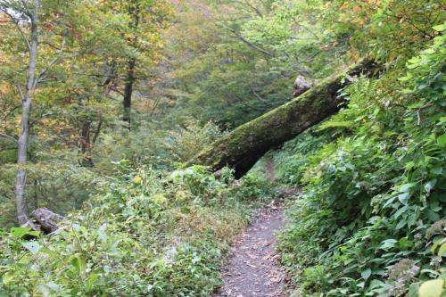 苔むした木のトンネルです。