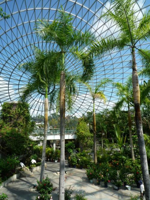 青い空に緑の木々<br />南国ムードいっぱい(^^)<br /><br />1000株以上の洋ラン、珍しい観葉植物が園内を華やかに彩っています
