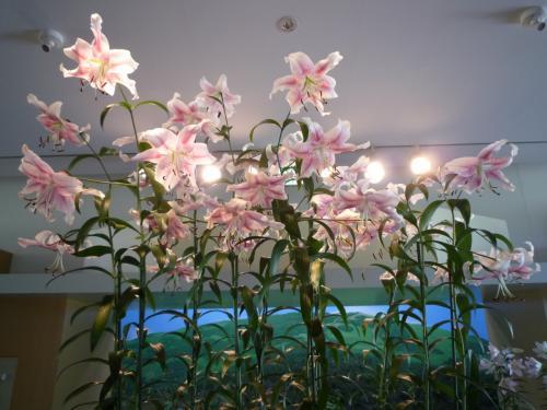 <br />園内を回ってみましょう<br /><br />ユリの館・・<br /><br />可憐なユリの花が一年中展示されてます<br /><br /><br /><br />