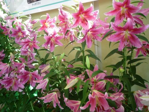 <br />品のあるお花ですね<br /><br />芳ばしい香りも館内全体を包み込みます。<br />