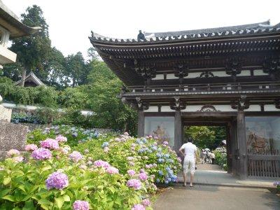 アジサイの時期なので、有名なアジサイの名所・福知山の観音寺に行きました。<br />紫陽花寺と呼ばれるところです<br /><br />