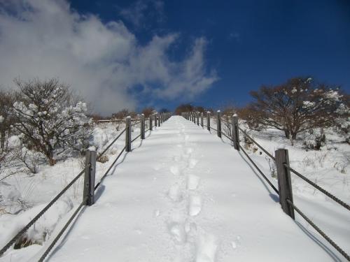 私は普通の運動靴を履いているが、登山者の足跡(写真)があり、雪は締まっている。足跡をたどれば登れそうである。いざ、決行!