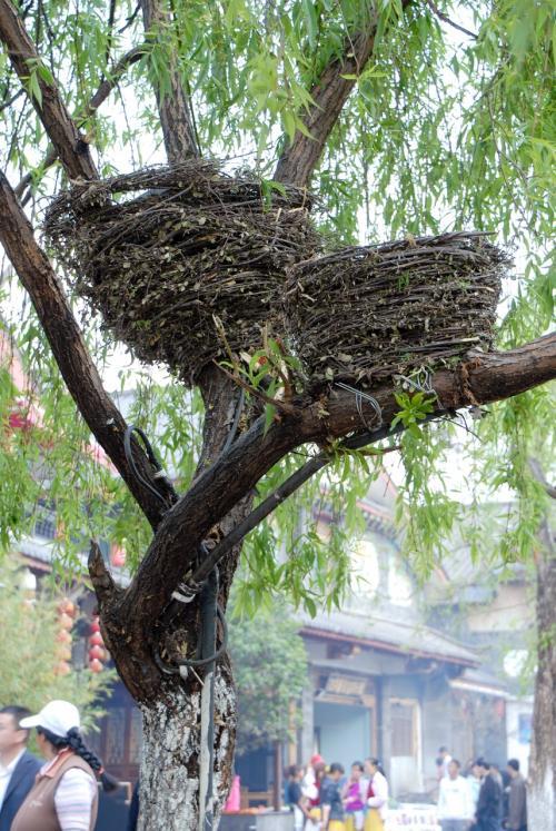 先程言いかけた「鳥の巣」ですが、実はこれは、、、