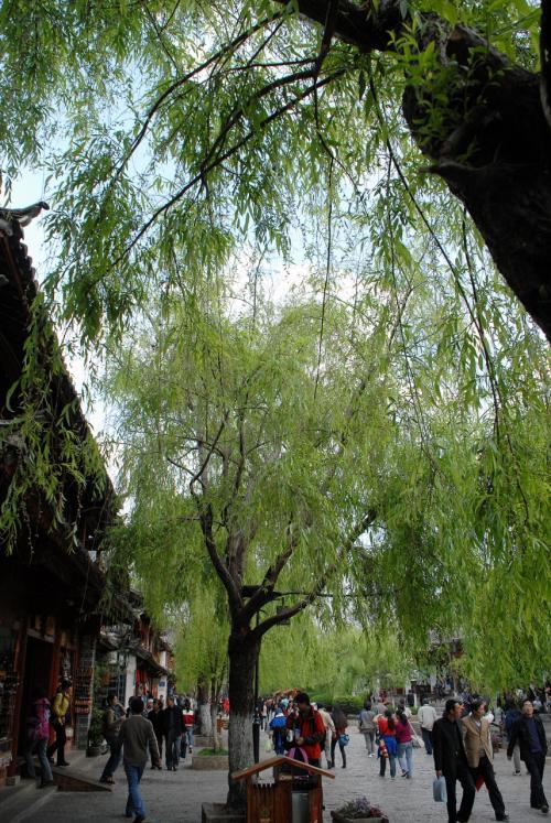 東大街の並木は、新緑が鮮やかで爽やかですね!