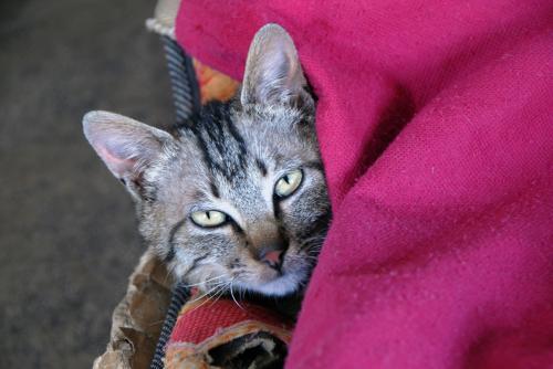 これは絵ではありません。そこで飼われていた子猫ちゃんです。<br /><br />めっちゃ温和しい。