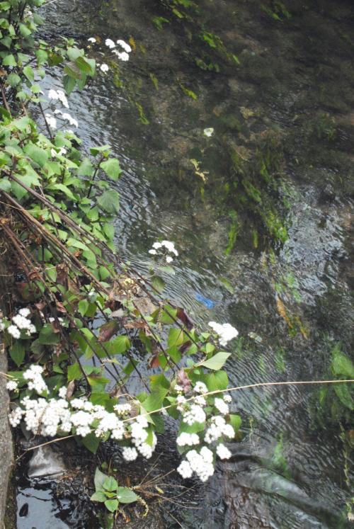 一寸反れて、生理現象を満たしていると、殆ど誰も来ない高台脇に流れていた小川に、白いブツブツが見えました!