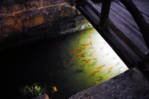 水路の金魚はこんな所にも。