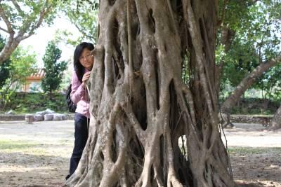 竹富島のガジュマルの木できじむなー発見!