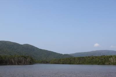 竹富島を離れ西表島へ。<br />仲間川のジャングルクルーズへ。<br />ディズニーランドの偽者と違い、本間モンのジャングルです。