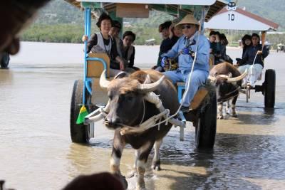 昼食の後、由布島へ。水牛車に乗って渡れます。