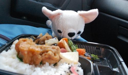 「お腹が空いたわん。」  <br /><br />「たべていい?」<br />          ちわこ<br /><br />