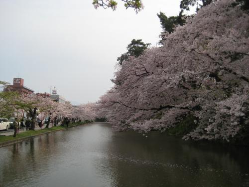 桜は美しいけれど、あまりに…、そう、あまりに見ごろが短すぎる。行くと決めてからは毎日、気が気ではなかった。<br /><br />「古今集の昔から、何百何千首となくある桜の花に関するうた、ーー古人の多くが花の開くのを待ちこがれ、花の散るのを愛惜して、繰り返し繰り返し一つのことを詠んでいる数々の歌、ーー少女の時分にはそれらの歌を、何と云う月並みなと思いながら無感動に読み過ごして来た彼女であるが、年を取るにつれて、昔の人の花を待ち、花を惜しむ心が、決してただの言葉の上の「風流がり」ではないことが、わが身に沁みて分かるようになった。」(『細雪』より) <br />