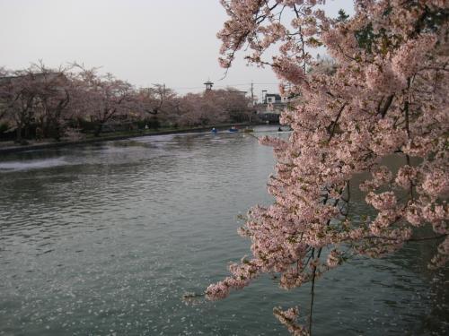美しく、心を癒す花はたくさんあるけれど、桜の花は、人の心をせつなくさせる。こんな花、やはり他には無いのでは?<br /><br />「・・・ふりゆくものはわが身なりけり」