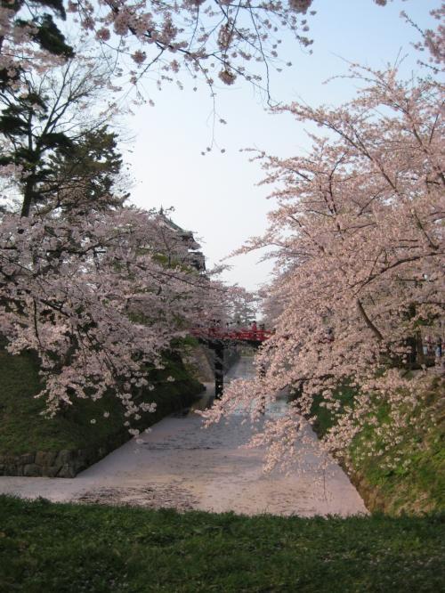 よく、桜は梅に比べ香りが無い、と言われるけれど、そうかしら?<br />私は、この香りが、好きで、好きで・・・。
