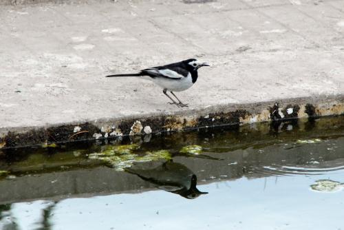 空港正面の池に来たら、小鳥が居ました。