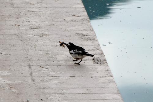 蜂?<br /><br />あれ?<br />この小鳥、片足が無いですね。<br />飛べるからホロー出来るみたいですが・・・