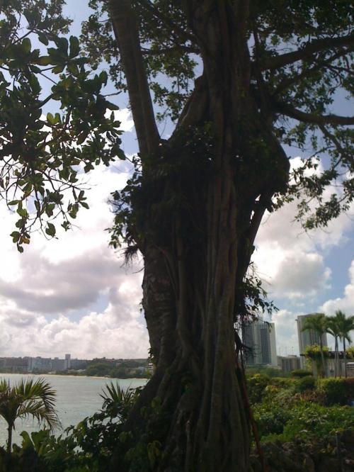 うーん、立派な木。生命力を感じる。<br />