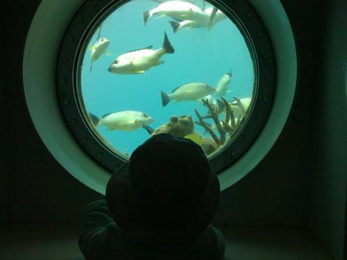 餌付けをしているようで、けっこう魚がたくさんいる。<br />息子は昨日のアンダーウォーターワールドから魚にも関心がでてきた。相変わらず「おっきい」と「いっぱい」のみで感動を表す。