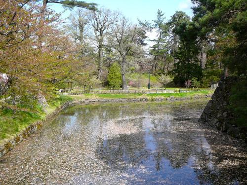 水面に浮かぶ桜花@弘前公園<br />なんとなく物寂しいですね