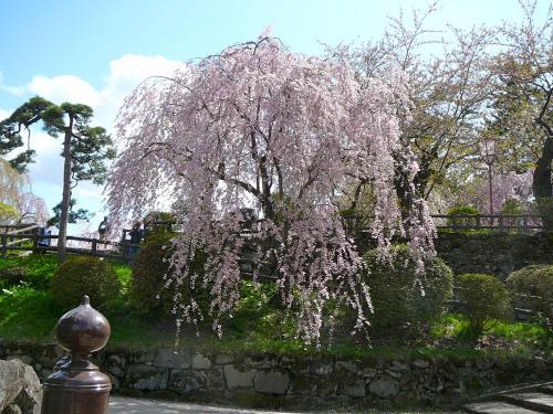 枝垂桜は見事!@弘前公園<br />300円の入場券を購入し本丸に向かいます。<br />鷹丘橋付近のシダレザクラが見事に咲いていて嬉しかった!