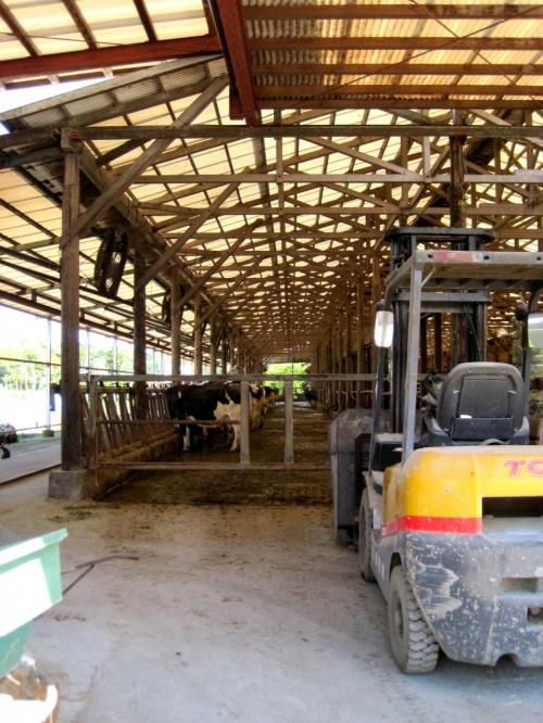 いたいた!<br /><br />牛がたくさんいました。<br /><br />口蹄疫の問題で、入口近くには立ち入り禁止の文字。<br /><br /><br />普段は、体験学習なども行われているそうです。