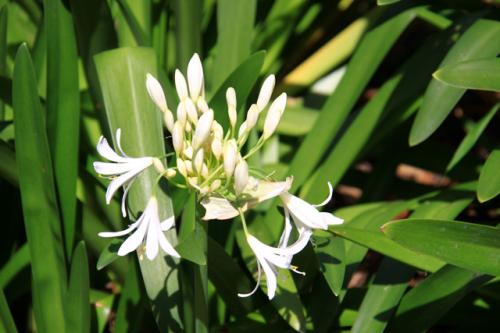 パプアニューギニアの美しい花々<br />熱帯雨林気候であり色鮮やかな花々が多く見られた・・