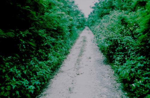 アイヤル浜へ向かう道。<br /><br />数えきれない程の蝶が飛んでいて、道はまっすぐで、果てしない。