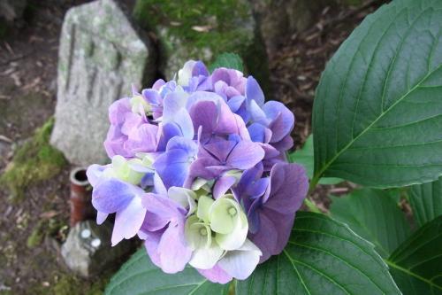 一つの花でこんなにいろんな色が・・