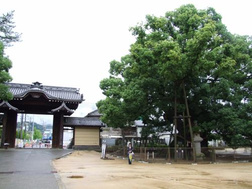 弘法大師誕生の時から繁茂しており、樹齢千数百年を経た大楠、樹高30mと説明されています。