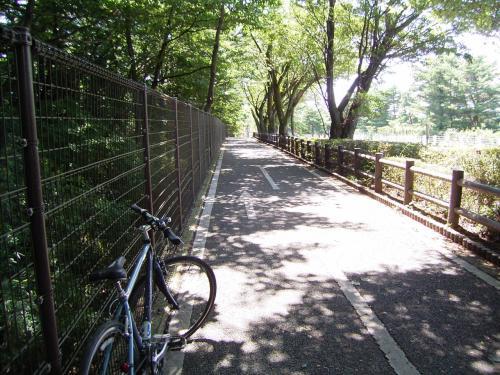 多摩湖の周囲には自転車道があり快適。暑いけど風もあって気持ちいい。