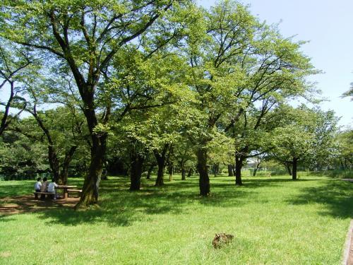 狭山湖の東側には狭山自然公園というのがあって、静かで気持ちいい。