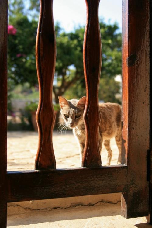 柵の外から中庭の猫達の写真を撮っていると、珍しい東洋人の来客に気付いた一匹の猫が近づいてきてくれた!<br />「カリメーラっ!」-ギリシャ語でおはよう-<br /><br />
