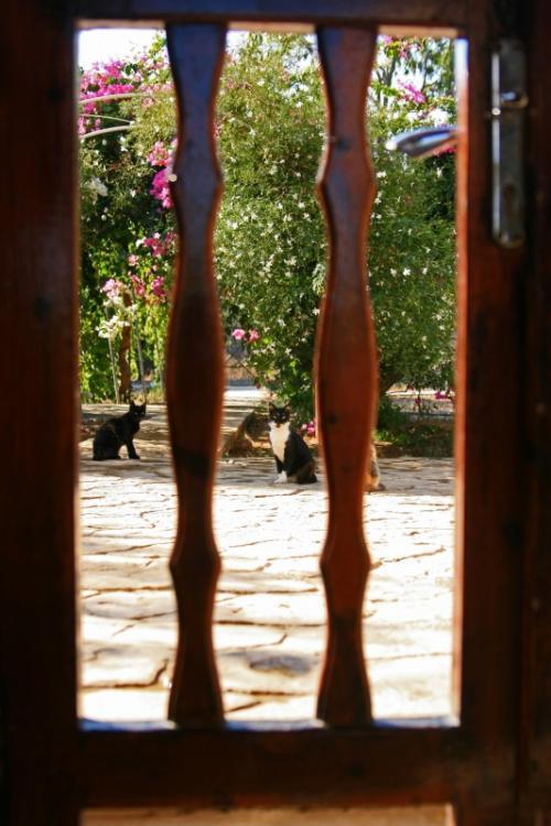 中庭では色んな柄の猫達が思い思いにくつろいでおり、その様子を見ただけで私の幸福ボルテージ急上昇!