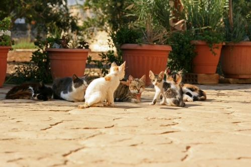 朝の柔らかい陽射しの中、身を寄せ合って気持ちよさそうにまどろんでいる猫の群れ <br />