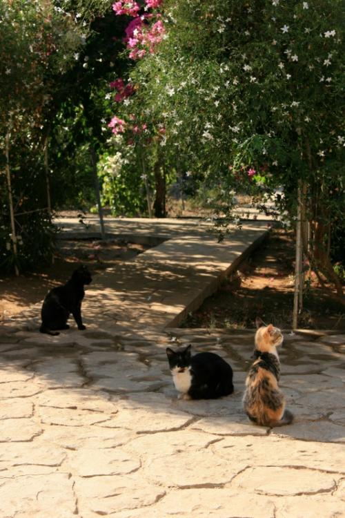ブーゲンビレアや木々が茂る美しい中庭で涼しい朝の空気の中の〜んびりくつろいでいます<br />ああ、ここはまさに猫の楽園やな〜<br />わたしも一緒に中庭でくつろぎたかったです<br />