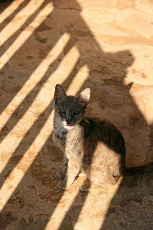 キリっとしてシュッとした美猫さんやね〜<br />とても人懐っこくてずっと足元にスリスリ〜とすりよっていた。