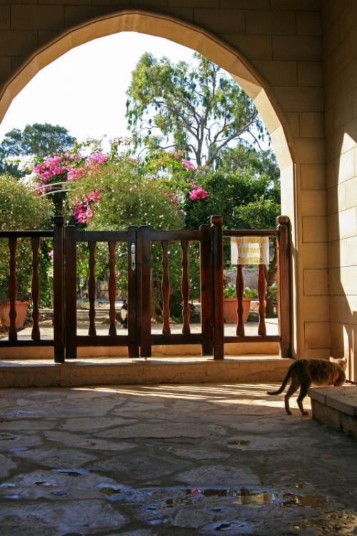 ちなみに猫修道院では入ってすぐの回廊の一部まで立ち入る事が出来るのですが、それ以外の回廊部分や中庭へは立ち入ることは出来ません。<br />しかし多くの猫達は写真の奥にある中庭でのんびりくつろいでいるものですから、なんとももどかしい〜<br />