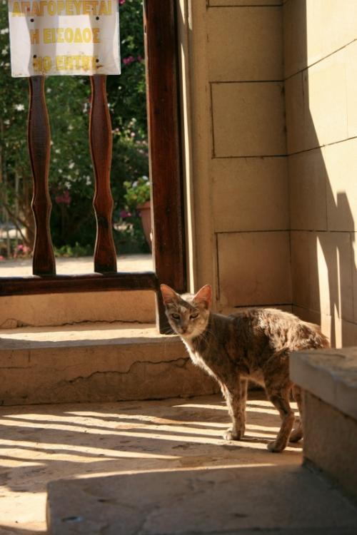 キプロスの猫はキプロスの人同様に温かいなあ〜<br />撫でてもいいよ、と言ってくれたので存分になでさせて頂いた・<br />私の幸福ボルテージさらに20アップ↑<br />