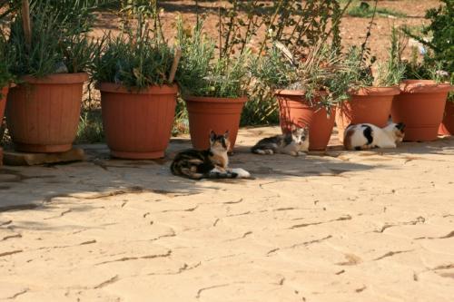 それにしても、この修道院には200匹ともいわれる数の猫が放たれているとの事<br />確かに猫は多いものの私が目に見えている猫達の数はまだまだ氷山の一角といったところなのだろう<br />200匹もの猫が大集合する光景というものもぜひ見たかったものだ。
