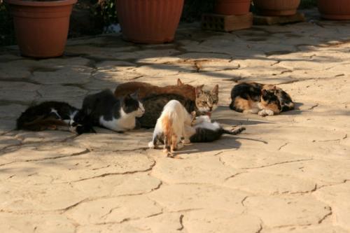 中央のやんちゃな仔猫二匹を取り囲むように大人猫が守っている、そんな光景にも見えた。なんとも微笑ましいな〜<br />