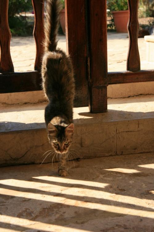 柵の外からニヤニヤぶつぶつひとり言を言いながら覗きこんでいる私を不憫に思ってか、もう一匹の猫が私の元へ遊びにやってきた〜きた〜きた〜