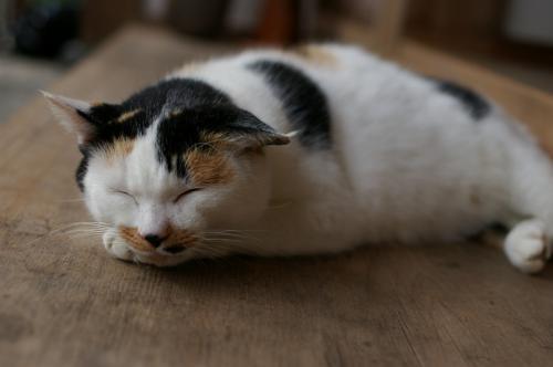 寝ていたが猫フーズに反応して目を覚ました。美味しそうに食べてくれた。平等寺のニャンコは3匹とも丸々している。可愛がってもらえて(^_^)v