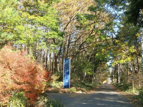 中央高速道路「小淵沢」インターで降りて八ヶ岳山麓をドライブしてダイヤモンド八ヶ岳に向かう。秋が深まり紅葉が綺麗。