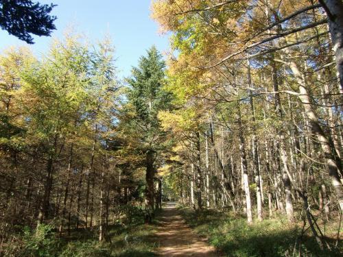 天気のいい朝はホテル周辺の森(写真)を散歩する。木々が紅葉していて森は鮮やか。