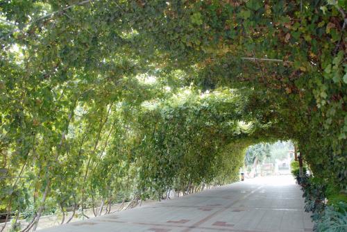 葡萄棚の通路もあります。