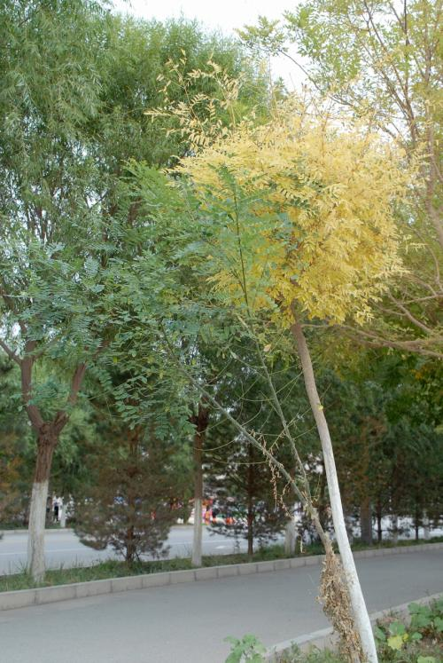 あ!<br />また紅葉してる葉としてない葉が混在している木がありました。<br />生で見るととっても綺麗なのですが、写真に撮るとしょうもない・・・