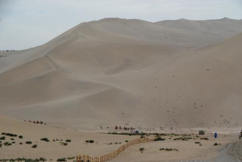 鳴沙山山頂へ向かう駱駝たち。<br /><br />駱駝に乗ってフルコースを行き来すると、80元かかるそうです。<br />前より20元上がっていました。