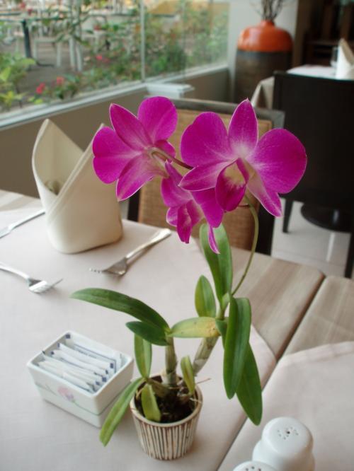卓上花の蘭<br />こんな小さな鉢でも力強いです!<br />暖かい国はいいですねぇ。