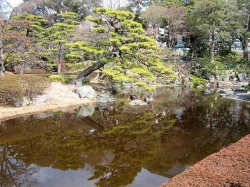 「二の丸池」<br />広さも結構ある<br />この松も渋い<br />池の中にはひれの長い鯉がいた<br />看板を見たら「ヒレナガニシキゴイ」<br />そのままだ