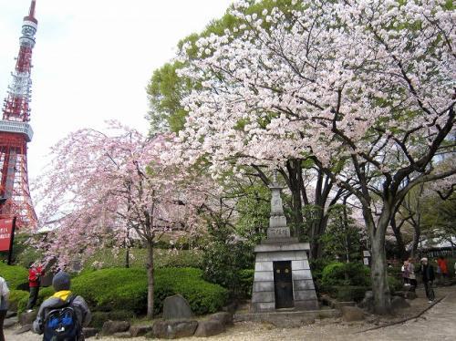 桜も満開、ちょっと散ったくらいかな?<br />